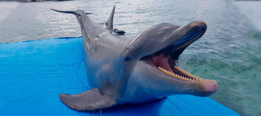 México participa en estudio multinacional sobre bienestar animal en mamíferos marinos