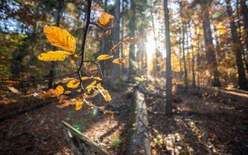 El país con más de 100 normas y ningún plan para los bosques