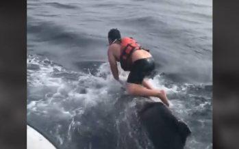 Un pescador salta sobre una ballena enredada para liberarla