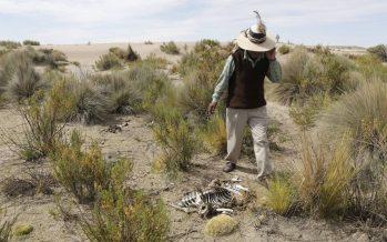 América Latina pierde al menos 17.000 millones de dólares anuales por el cambio climático