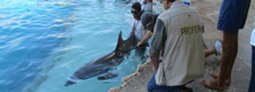 Inspeccionan condiciones de trato digno en delfinario de la isla Cozumel
