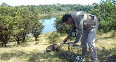 Rescatan y liberan 68 ejemplares de vida silvestre y entregan 14 más a centro de investigación