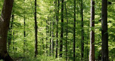 Recupera México su vocación forestal en los últimos seis años