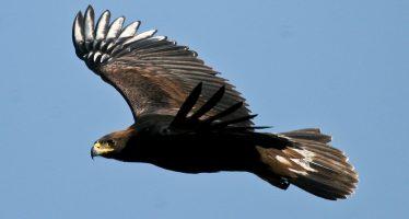 10 historias de éxito en la conservación de especies prioritarias