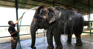 India abre el primer hospital para sus venerados elefantes