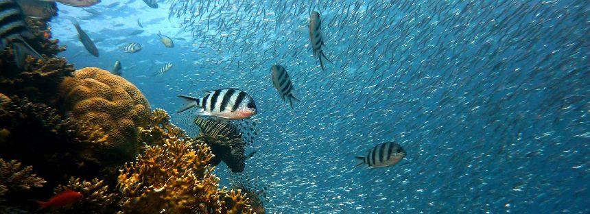 La subida del nivel del mar ayuda a construir islas de arrecifes de coral