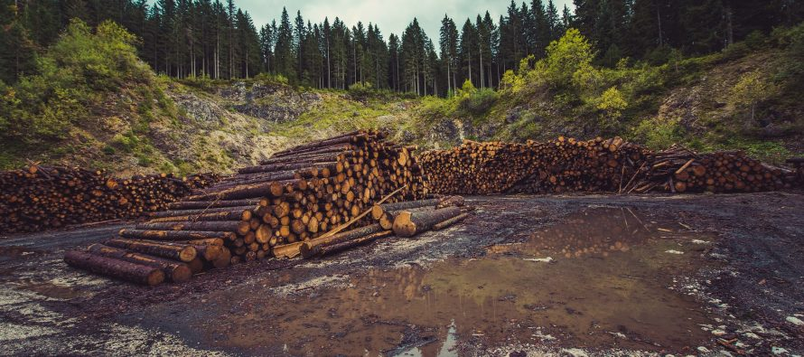 La deforestación en el Amazonas alcanza su nivel más alto en diez años