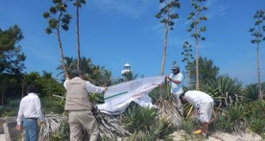 Imponen multa de 4 MDP por fiesta en isla Salmedina del Parque Nacional Sistema Arrecifal en Veracruz