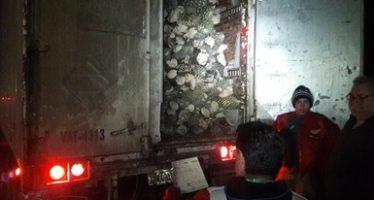 Aseguran cargamento de 28 de toneladas de fuste de yucca schidigera y un tractocamión