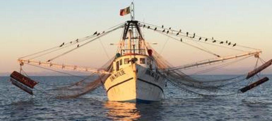 Aseguran embarcación mayor por pesca ilegal en área de refugio de vaquita marina
