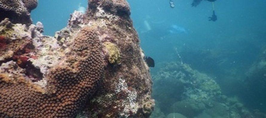 Concluye restauración de 2,476 m2 de arrecife afectado