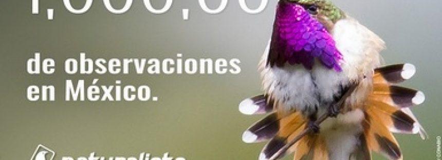 Un millón de observaciones de especies registradas en México