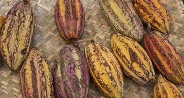 Certamen Mesoamericano de Cacao Amigable con la Biodiversidad