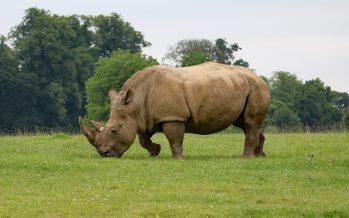 Declaración sobre la revocación de la prohibición del comercio de partes de rinoceronte y tigre en China