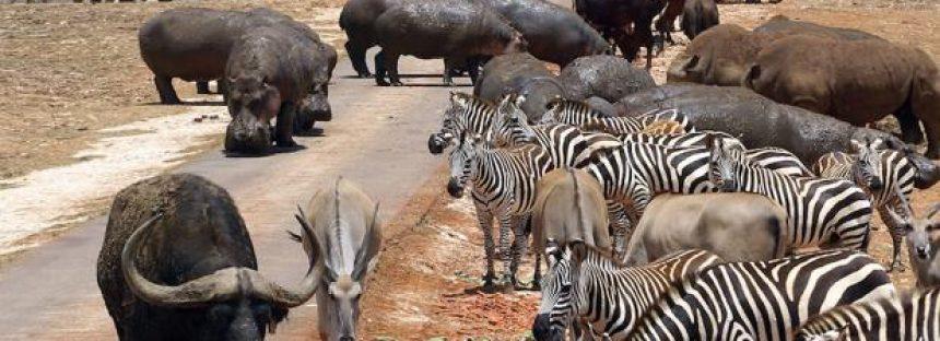 Lista Roja de Especies Amenazadas 2018