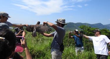El Parque Nacional Cofre de Perote recibe la migración de aves rapaces más grande del mundo