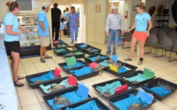 Ahora es agua tibia: el cambio climático separa a las tortugas marinas en las costas de Cape Cod