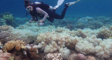 Los corales supervivientes de la Gran Barrera de Coral tienen una mayor resistencia a las olas de calor