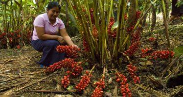 La importancia de las mujeres en la gestión del medio ambiente