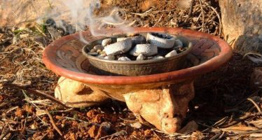 La extracción de resina de bursera para copal exige impulsar la protección  y conservación del recurso