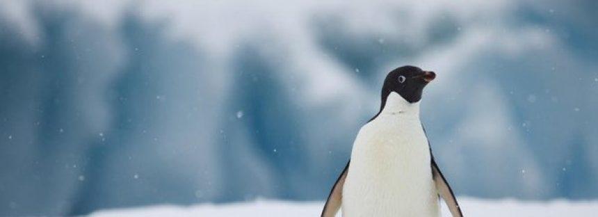 El informe de WWF revela una magnitud asombrosa del impacto humano en el planeta