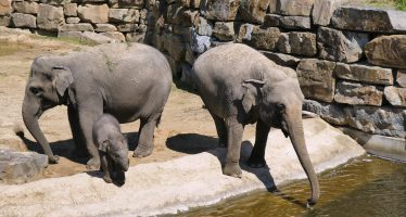 Indignación en un zoo de Tailandia por el mal estado de un elefante