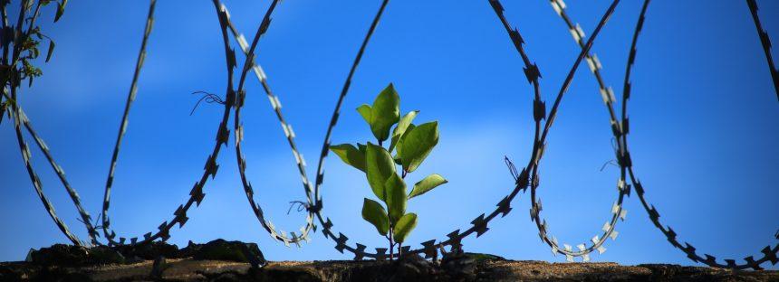 Condenan a persona a tres años de prisión por delitos contra el ambiente