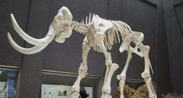 Con el mamut, la arqueología llegó a Tultepec