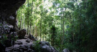 Grupo de Expertos de Evaluación de la Lista Verde Selva Maya adaptan el estándar para la región