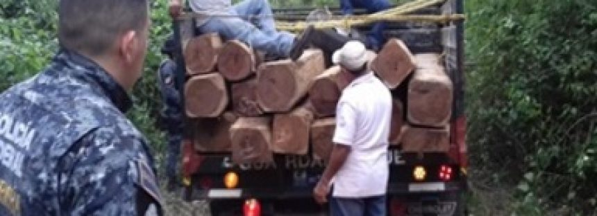 Aseguran 83.479 m3 de madera de granadillo