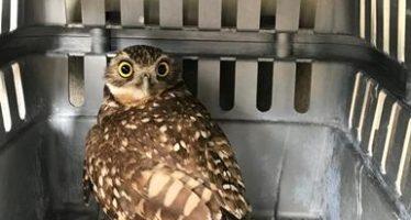 """Liberan cuatro aves de presa en el ANP """"parque estatal cerro zapotecas"""""""