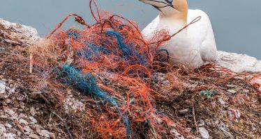 Cómo liberar a nuestros mares de los peligrosos equipos de pesca fantasma