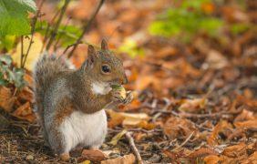 Identifican a las 66 especies invasoras más dañinas para la biodiversidad europea