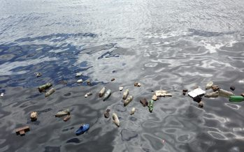 Microplásticos: el final de su viaje es el principio de la cadena trófica
