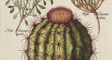 Ilustración científica en México, trazos que hacen ciencia