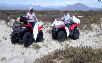 Encuentran 10 mil 200 huevos de tortuga golfina abandonados