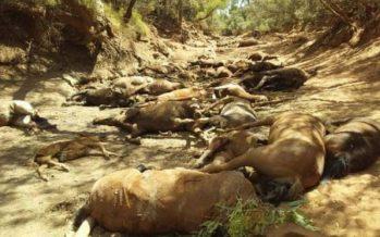 Mueren decenas de caballos por extremo calor en Australia