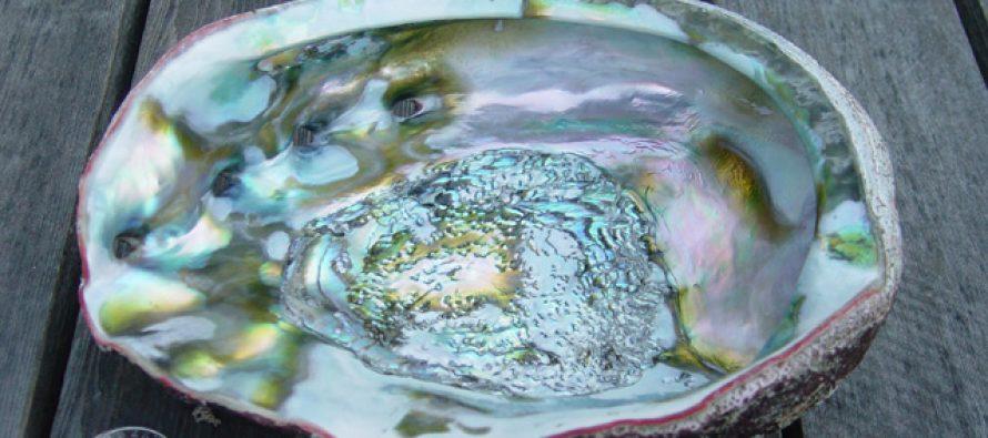 Evaluación de la pesquería de abulón azul (Haliotis fulgens) en la Bahía de Baja California Sur, México