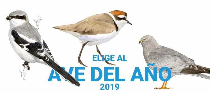 Elige al ave del 2019