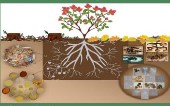 La biodiversidad del suelo: biología, ecología y aplicaciones biotecnológicas