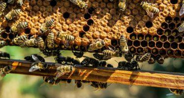 Tecnología implementada para la apicultura de precisión