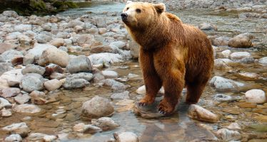 El cambio climático amenaza a la población de osos del cantábrico