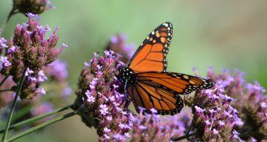 Al rescate de la Reserva de la Biósfera Mariposa Monarca