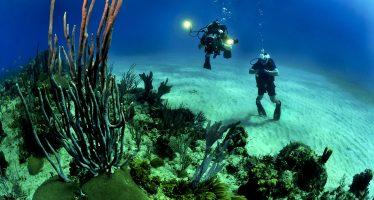 MERMAID, una nueva herramienta para estudiar y salvar los arrecifes de coral
