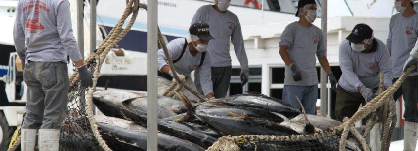 Inicia el 20 de enero temporada de captura de atún en el Océano Pacífico