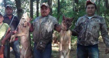 Presenta Profepa denuncia penal ante la PGR por caza ilegal de coyotes en Áporo, Michoacán