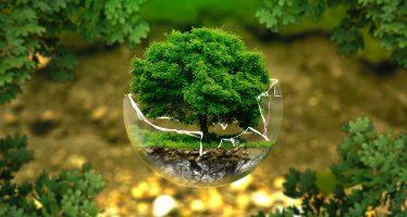 Restauración ecológica: la oportunidad que representa para España