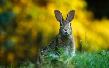 """Un alcalde de Madrid llama a cazar conejos """"con palos"""" y luego se desdice"""