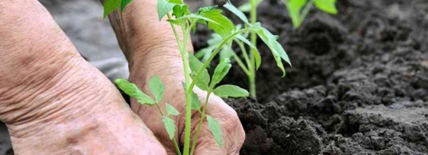 Ingenieros agrícolas: pieza clave para alimentar a una población en constante y rápido crecimiento