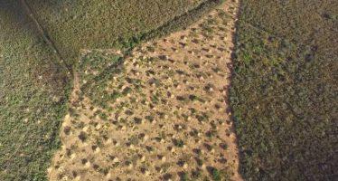 Las termitas han construido la mayor estructura del planeta